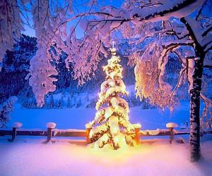 heller-weihnachtsbaum-im-schnee